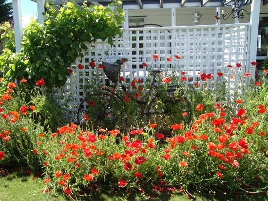 poppies in the garden at Skibo House B&B
