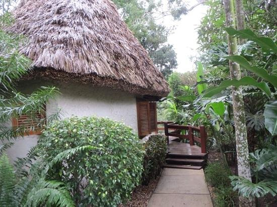 The Lodge at Chaa Creek: Beautiful thatched roof accomodations