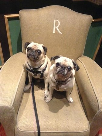 Hotel Rex San Francisco: Waiting in the lobby...