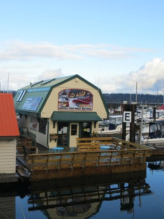 Campbell River Whale Watching and Adventure Tours: Campbell river whale watching office