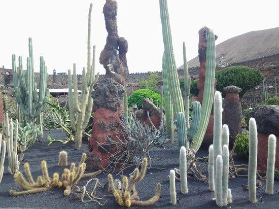 Atlantis Las Lomas: cactus da tutto il mondo