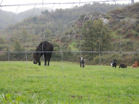 Agriturismo Riomaggiore Mare e Monti : Animali al pascolo nei dintorni dell'Agriturismo