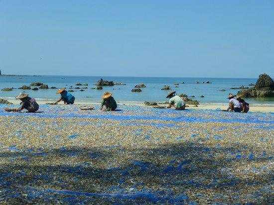Thande Beach Hotel: Village pêcheurs séchage poisson