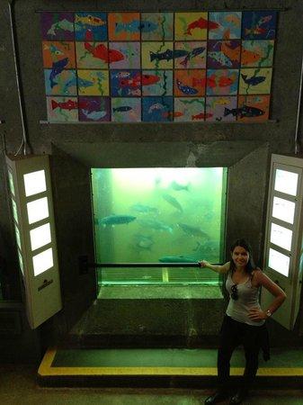 Hiram M. Chittenden Locks : As janelas de vidro para ver debaixo d' água.