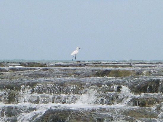 Camurupim Beach : foto 1