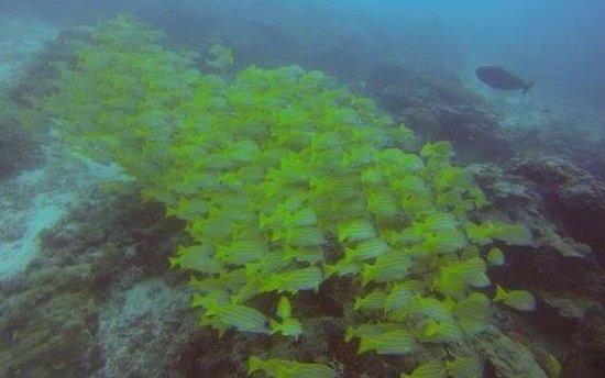 Bandos Maldives: Fish