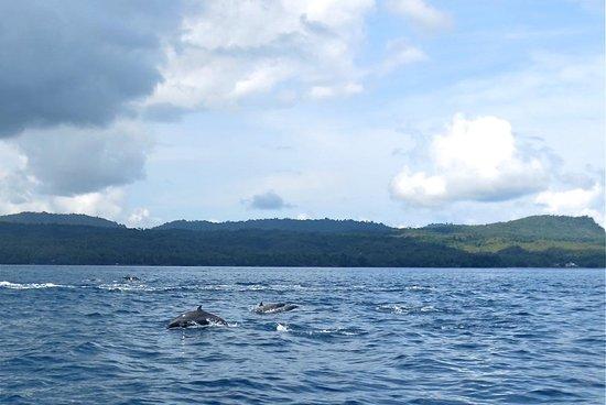 Casa Nemo Beach Resort and SPA: dolphins
