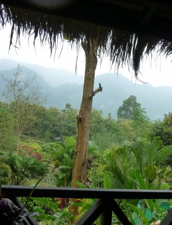 Hillside - Nature Lifestyle Lodge: la jungle partout autour