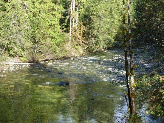 Englishman River Falls Provincial Park : Englishman River Falls V