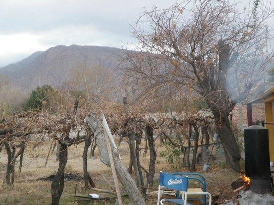 Hostel Lo de Chichi: Backyard