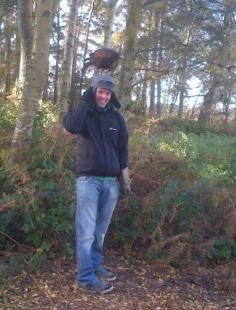 Forest Falconry: PeeWee the Harris Hawk