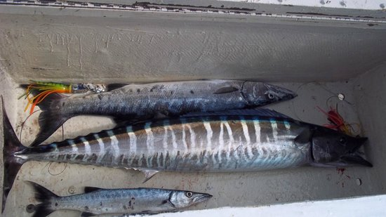 Saint Michael Parish, Barbados: Wahoo and small barracudas
