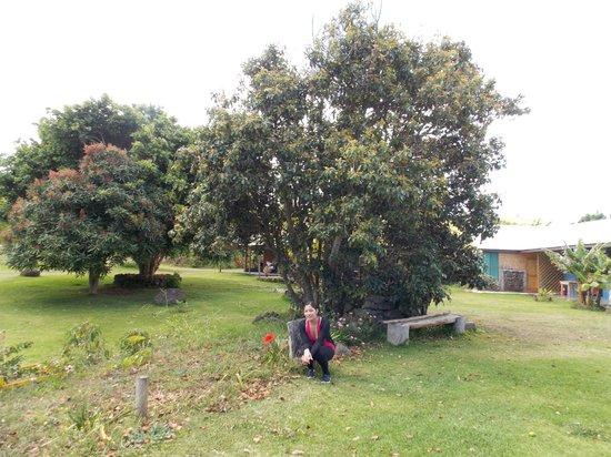 Pukao Hostel : jardines