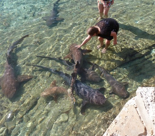 Exuma Water Tours: Petting the sharks