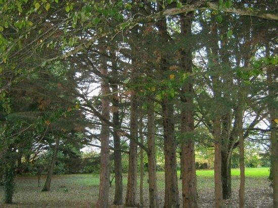 Logis Manoir de la Giraudiere : joli jardin