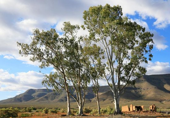 Tankwa Karoo National Park: One of the campsites
