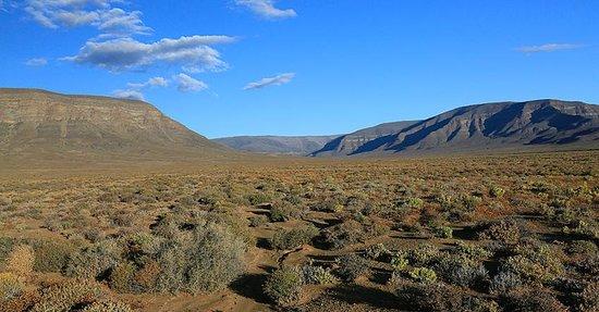 Tankwa Karoo National Park: Typical landscape
