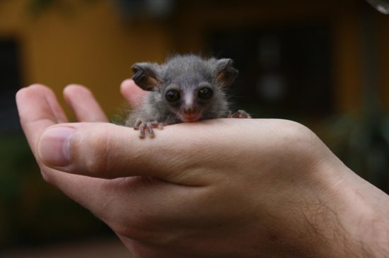 Trees Too Guest Lodge : Baby bush baby
