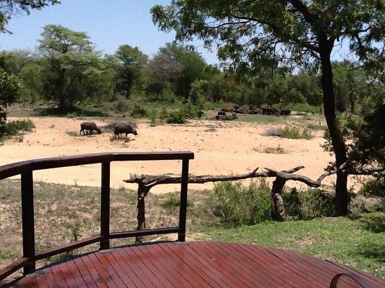 Shumbalala Game Lodge: Cape Buffaloes' spa day
