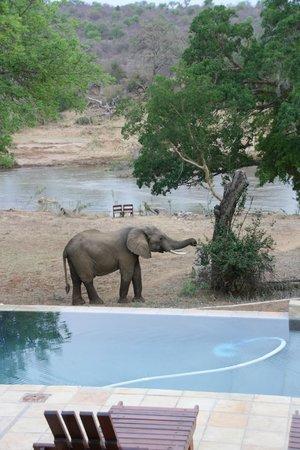 Kurhula Wildlife Lodge: Olifant op bezoek