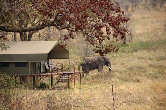 Nkasa Lupala Tented Lodge: prachtige ontmoetingen