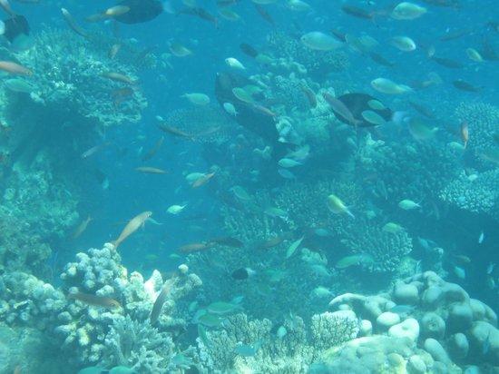 "Komandoo Maldives Island Resort: ""Fischsuppe"""