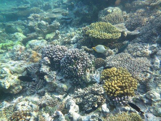 Komandoo Maldives Island Resort: Korallengarten