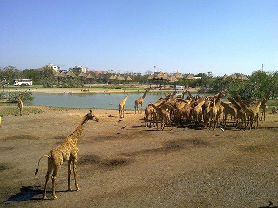 Dusit Zoo: Safari park