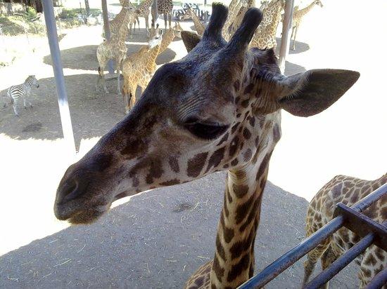 Dusit Zoo: Cute!!!!