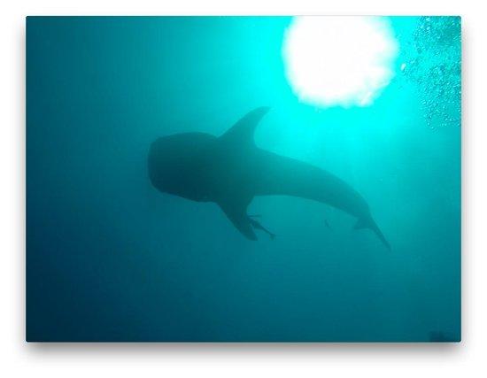 Sakalav' Diving: Je suis juste en bas...