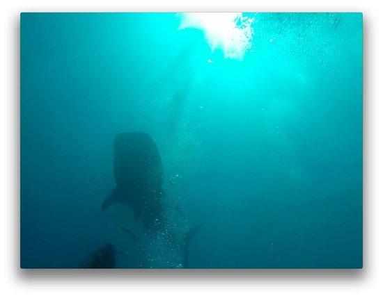 Sakalav' Diving: Il aime bien ça, les bulles!
