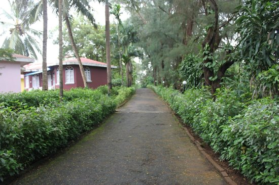 Varca Palms Beach Resort : Pathway to Beach