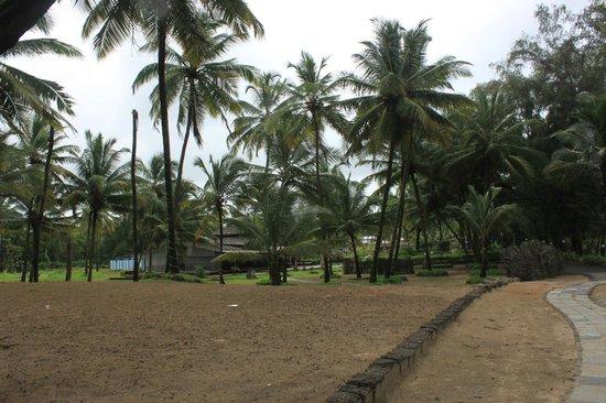 Varca Palms Beach Resort : View from room