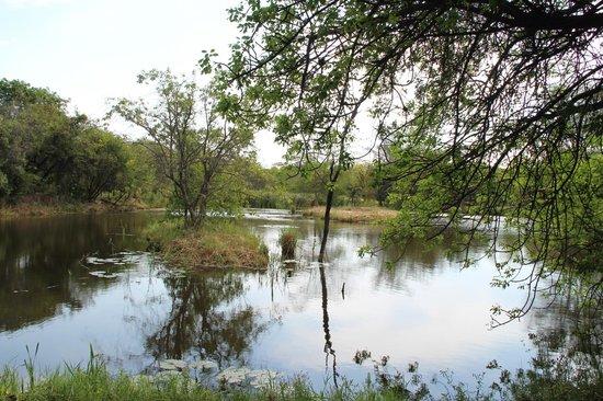 Aha Sefapane Lodge and Safaris : Het uitzicht op de vijver