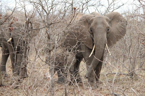 Aha Sefapane Lodge and Safaris : Ochtendsafari - Olifanten
