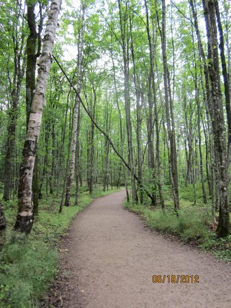 Pictured Rocks National Lakeshore: A trail towards one of the many waterfalls in the area