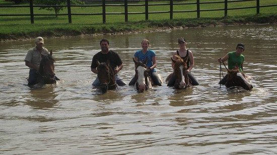 Vanderbeek Stables - Private Rides: Taking a dip with some friends .....