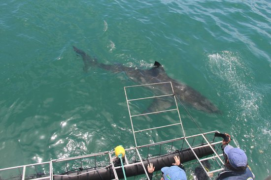The Potting Shed Accommodation : Shark Dive