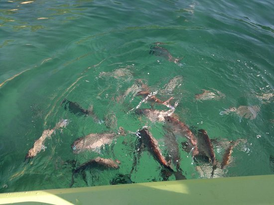 Pop Inn Bed and Breakfast: Great Fishing and clear blue sea