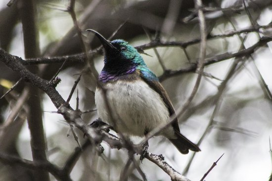 Aha Sefapane Lodge and Safaris: white bellied sunbird at Sefapane Lodge