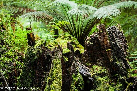 Tarkine Wilderness Lodge: Tarkine Forest