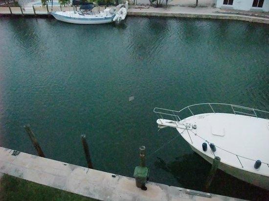 Sombrero Resort & Marina: Ray swimming by