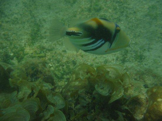 Casuarina Resort & Spa : poisson