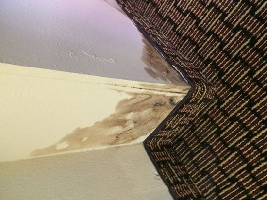 Comfort Suites Raleigh Durham Airport/RTP: Mold on wall around window and ac unit