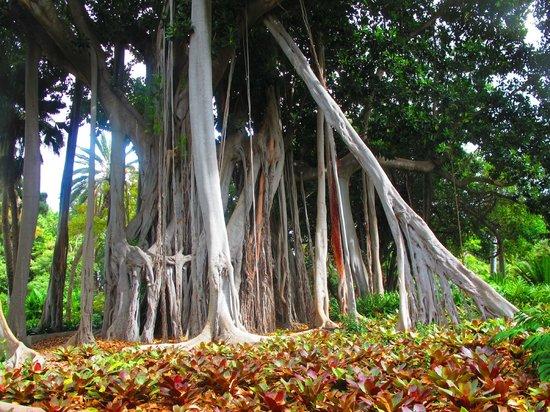 Jardin Botanico 3 - Picture of Botanical Gardens (Jardin Botanico), Puerto de...