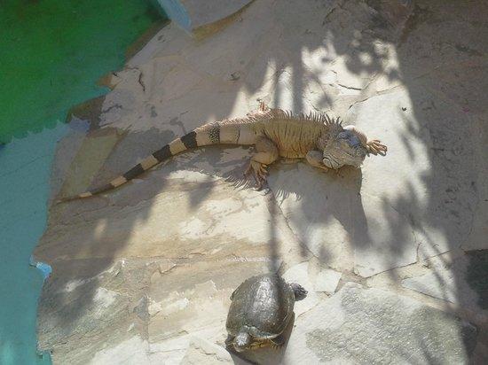 Aquaworld Aquarium & Reptile Rescue Centre : Leguan am Sonnen