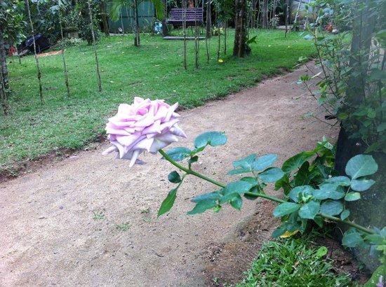 Pousada Ponte Branca: rosa do jardim