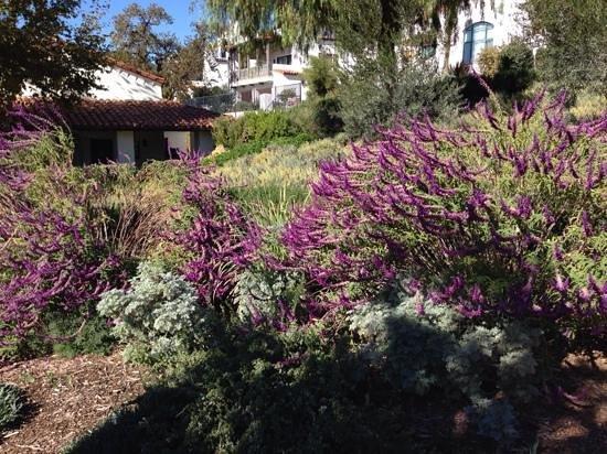 Ojai Valley Inn: flowers galore