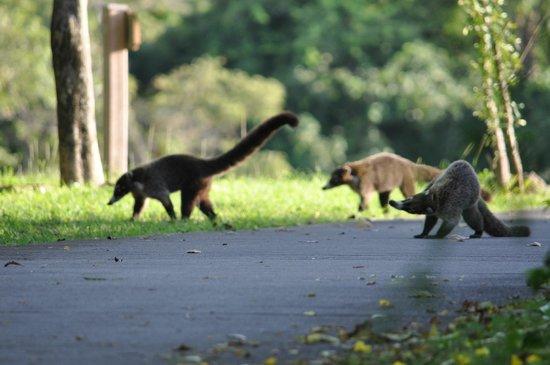 Four Seasons Resort Costa Rica at Peninsula Papagayo: On the golf path