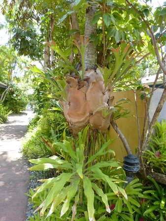 Pink Flamingo: Beautiful garden example 2